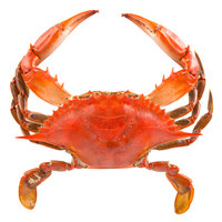 Linton's 5 1/4 inch Non-Seasoned Steamed Medium Maryland Blue Crabs - 42/Case