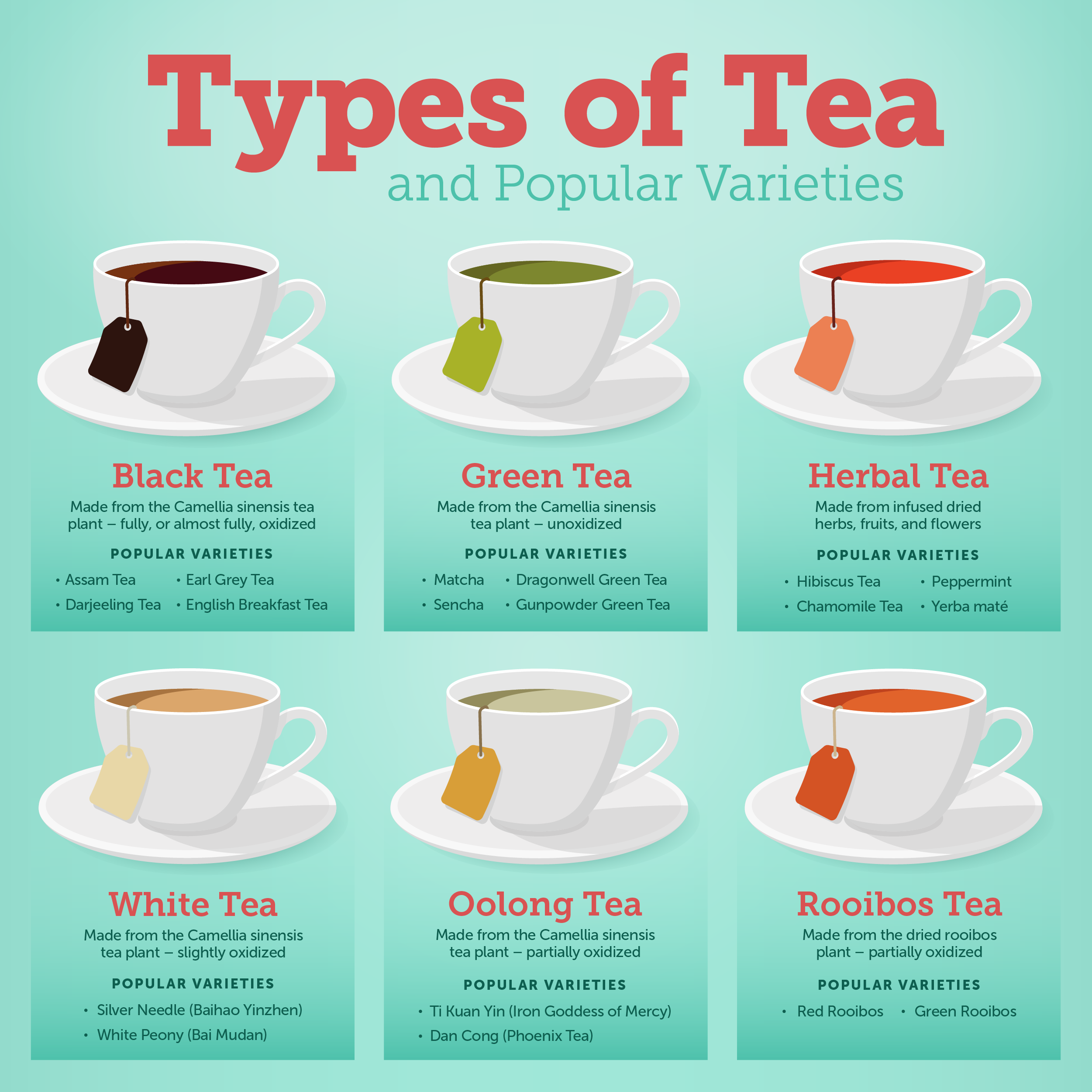 Types of teas and popular varieties infographic